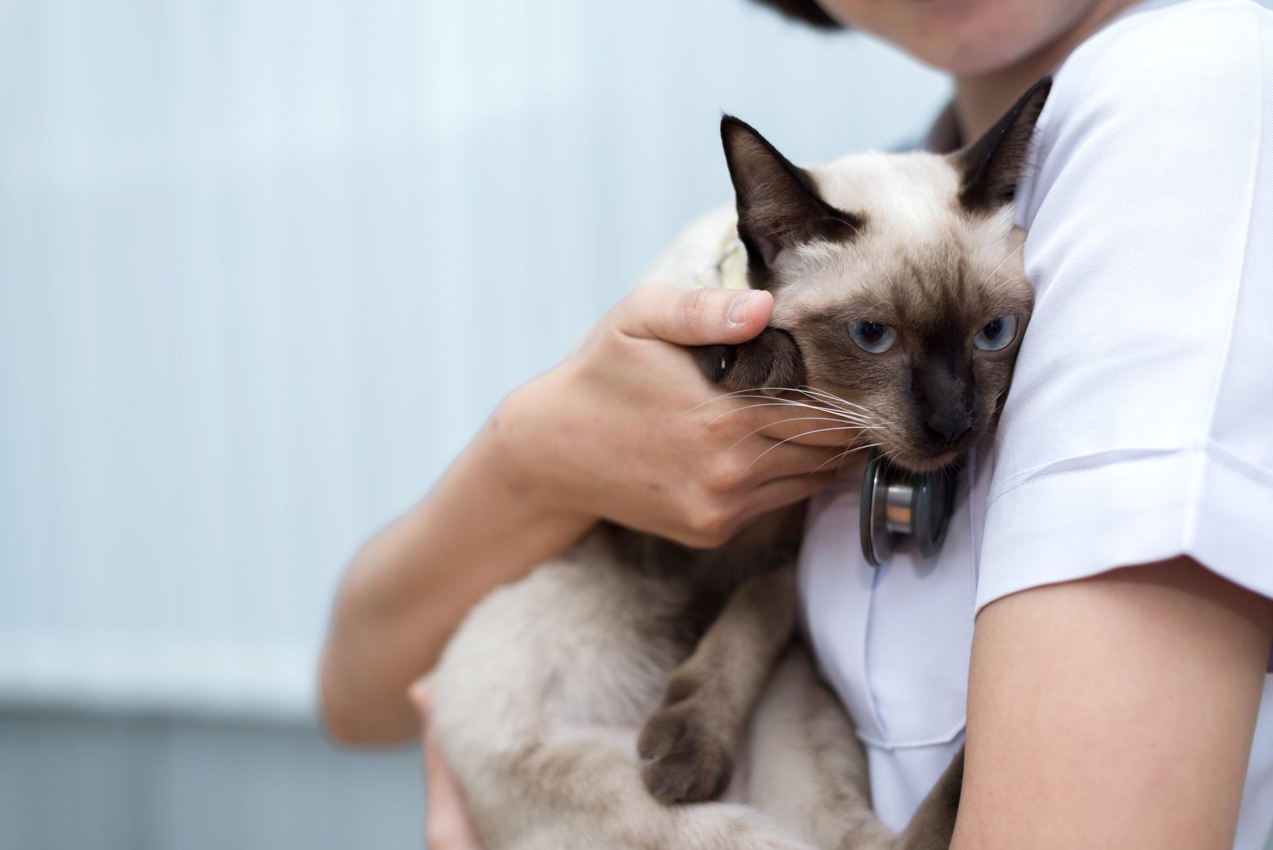 gatito abrazado