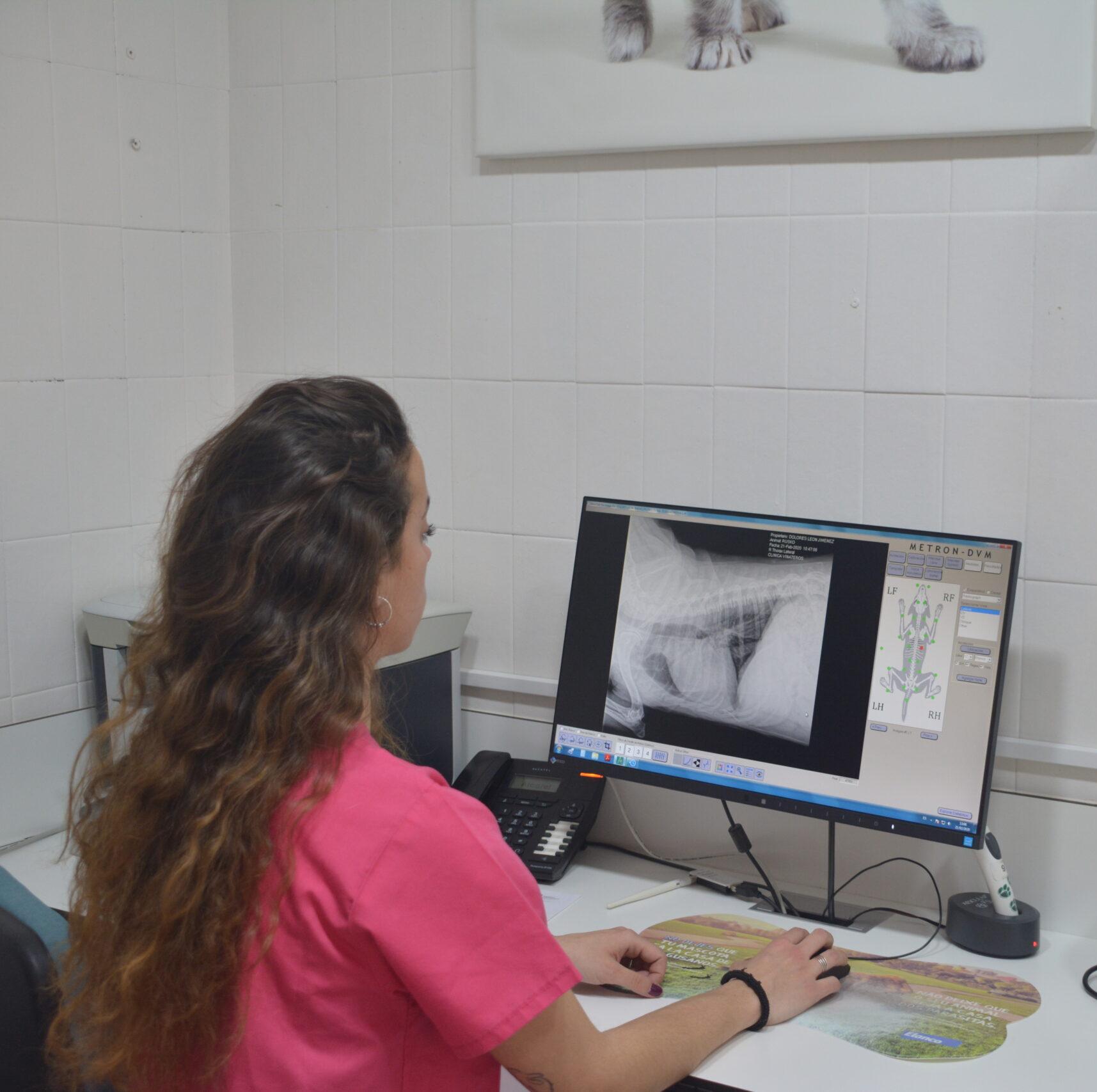 Foto de radiografía de gato en la pantalla del ordenador