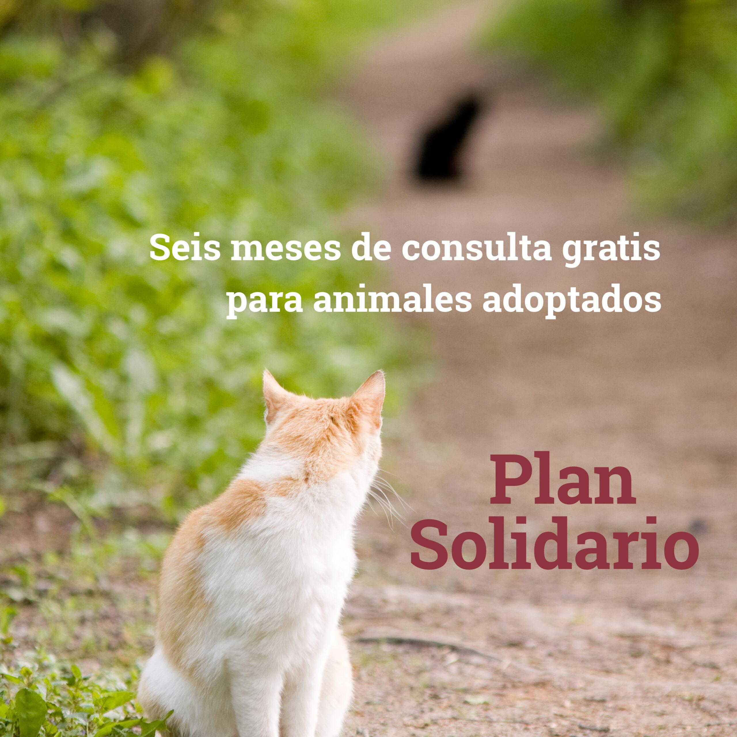 Foto Cartel Plan Solidario