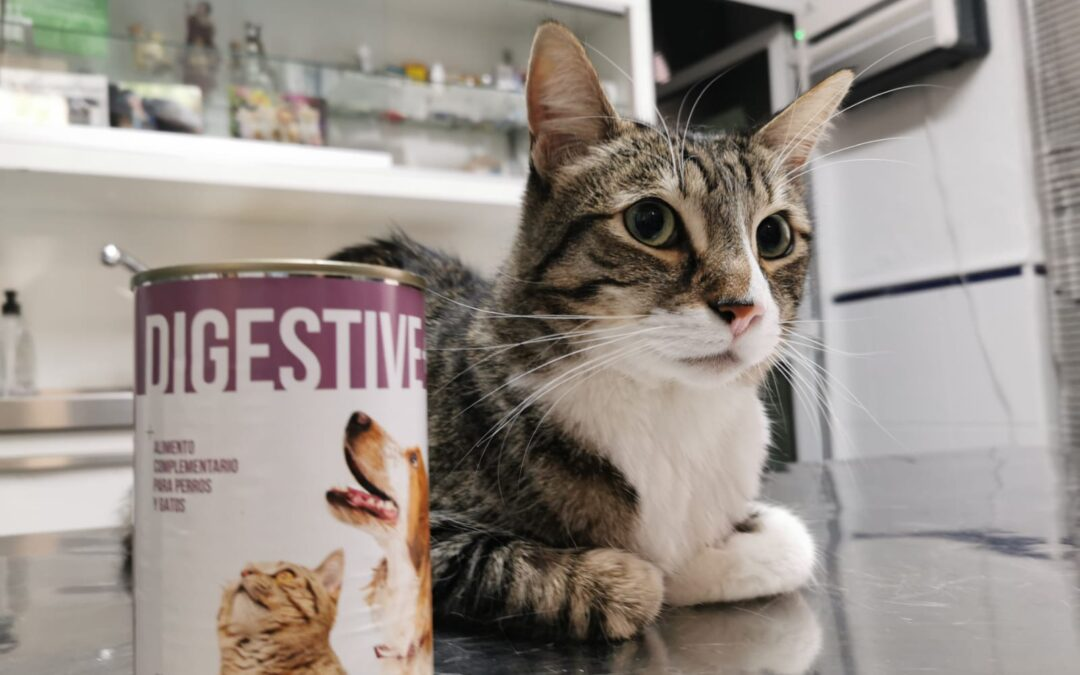 Foto de gato con envase de comida