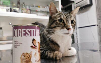 La alimentación es un factor clave en la calidad de vida de tu mascota