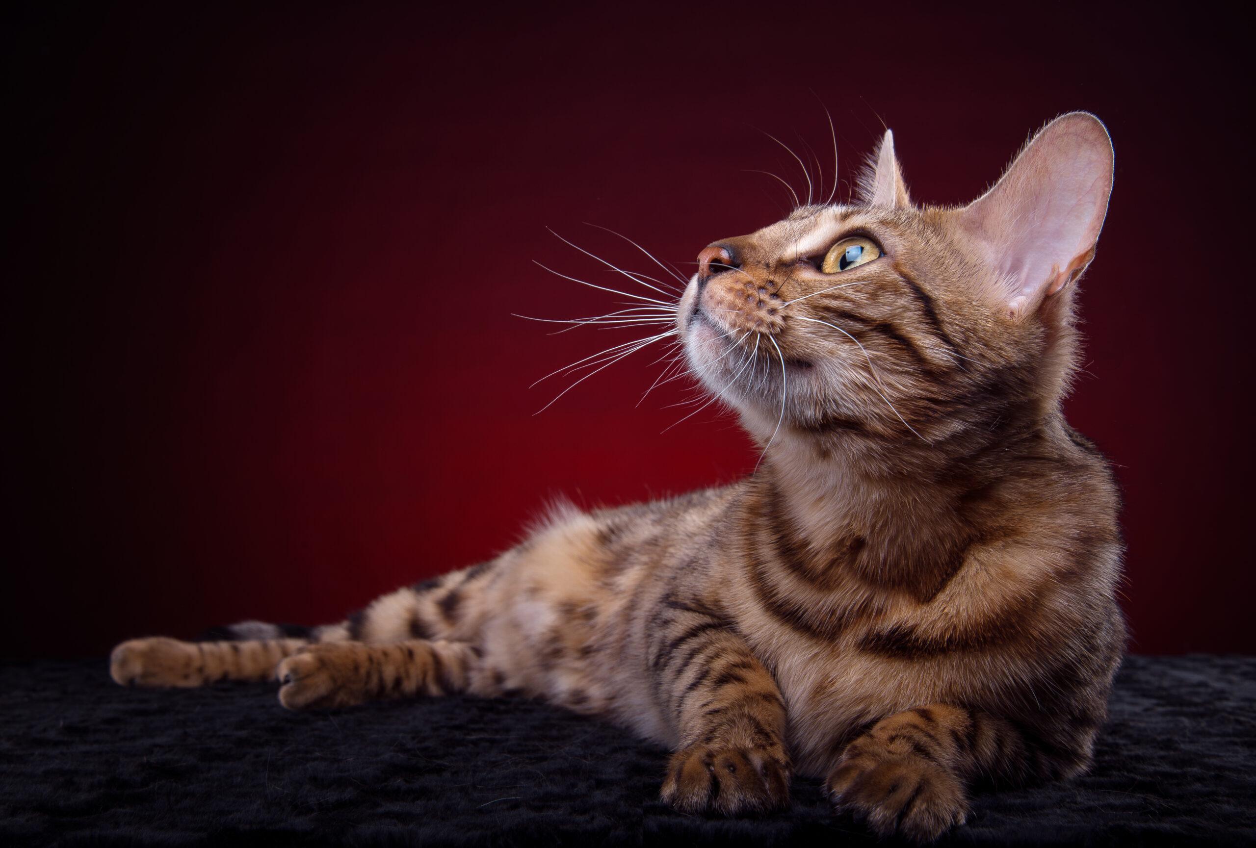 foto de gato mirón
